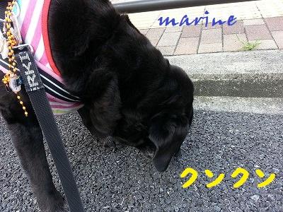 20140702marine3.jpg