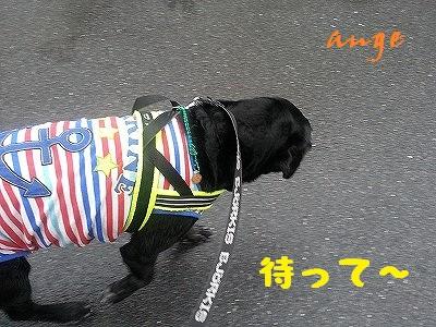 20140703ange2.jpg