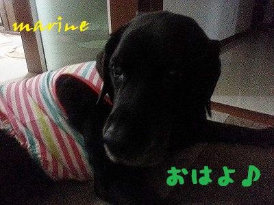 20140703marine1.jpg