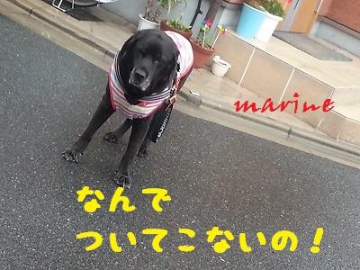 20140703marine4.jpg