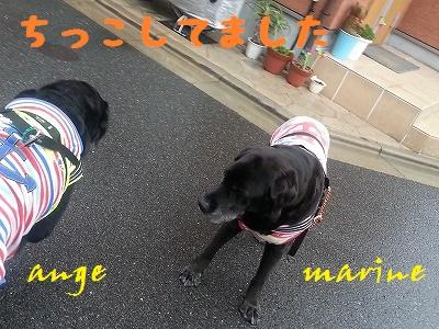 20140703marineange1.jpg