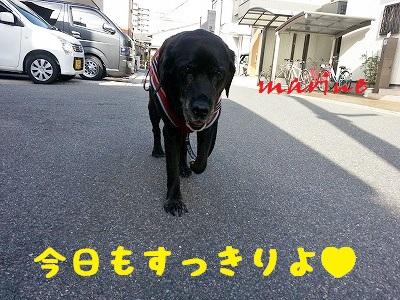 20140709marine4.jpg