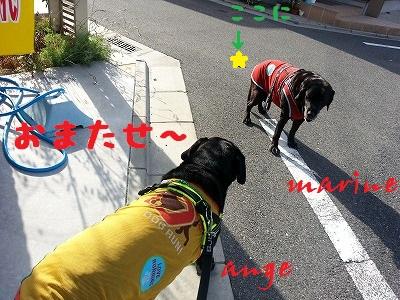 20140709marineange1.jpg
