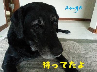 20140710ange5.jpg