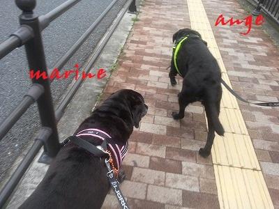 20140713marineange3.jpg