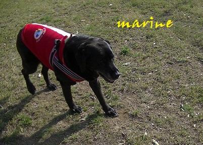 marine1_201405092319078f7.jpg