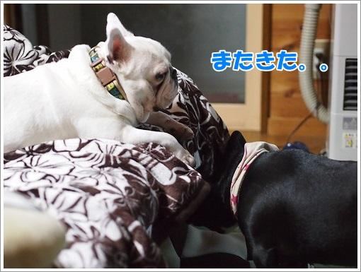 20140511_7.jpg