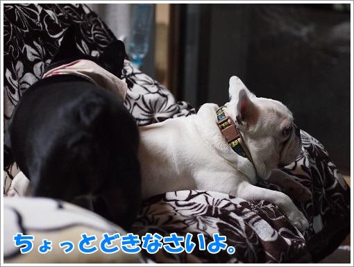 20140511_9.jpg