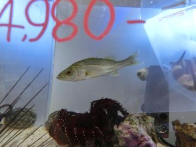 海水魚 283