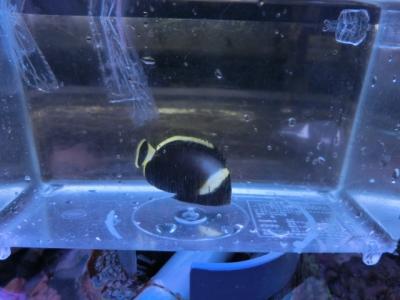 海水魚 281
