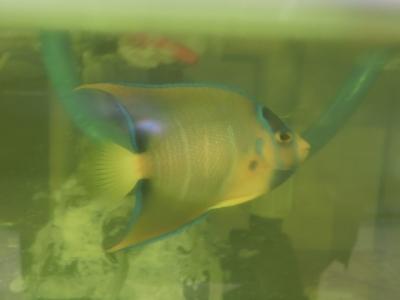 海水魚 287