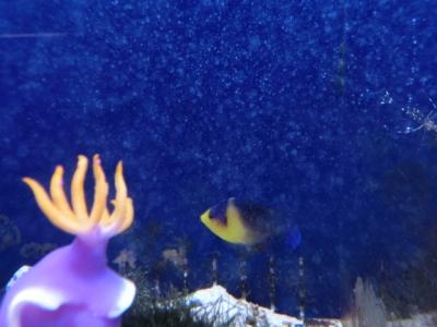 海水魚 286