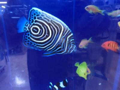 海水魚 288