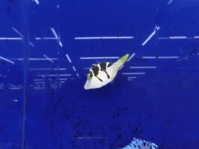 海水魚 289