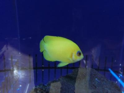 海水魚 290