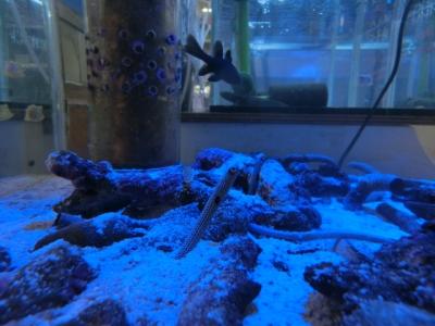 海水魚 291