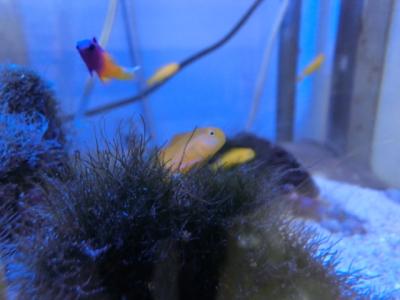 海水魚 297