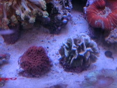 海水魚 294