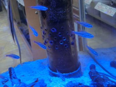 海水魚 298