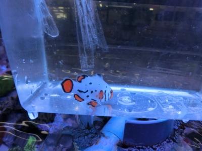 海水魚 303