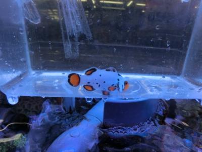 海水魚 300
