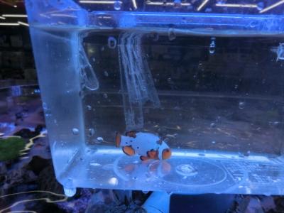 海水魚 301