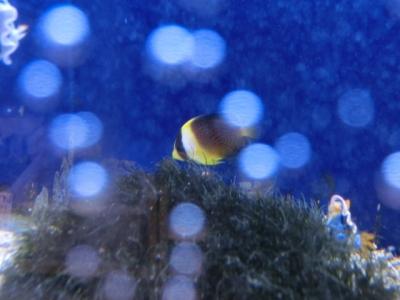 海水魚 308