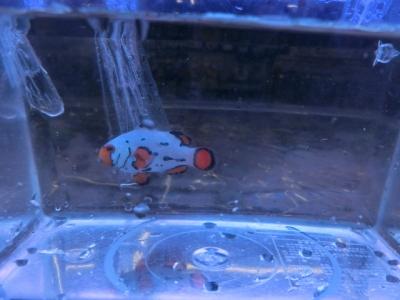 海水魚 304