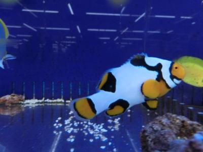 海水魚 306