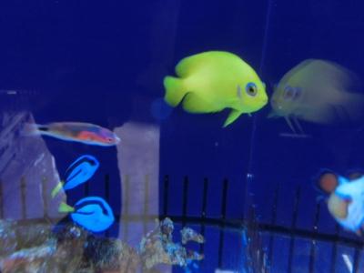 海水魚 313