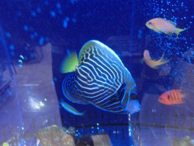 海水魚 310