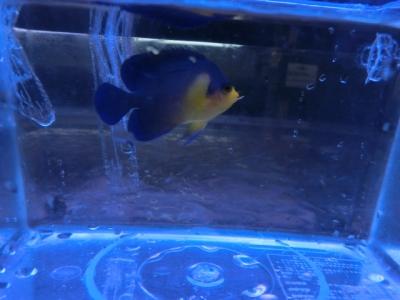 海水魚 311