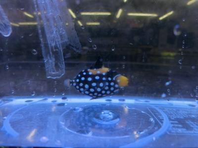 海水魚 318