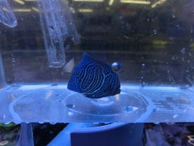 海水魚 316