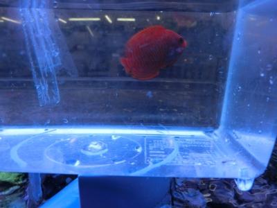 海水魚 317