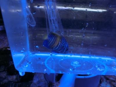 海水魚 320