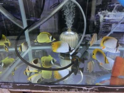 海水魚 324