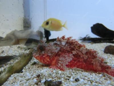 海水魚 325