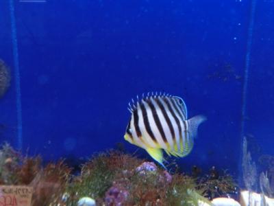 海水魚 334