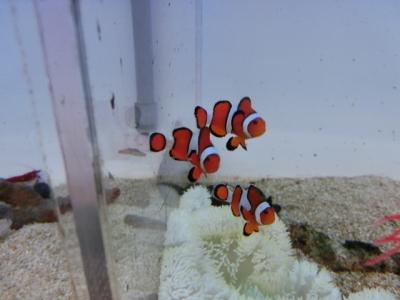 海水魚 330