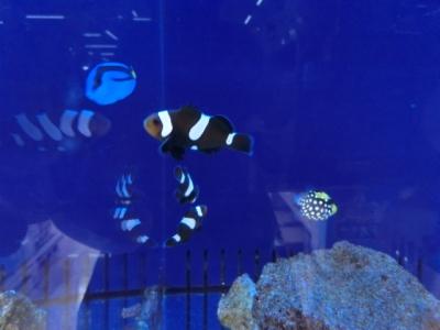 海水魚 331