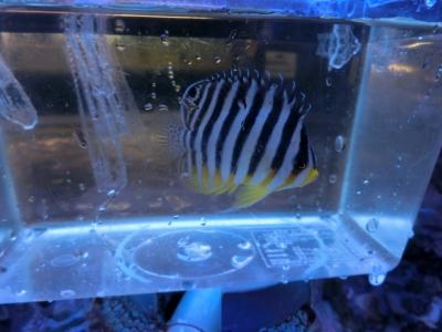 海水魚 332