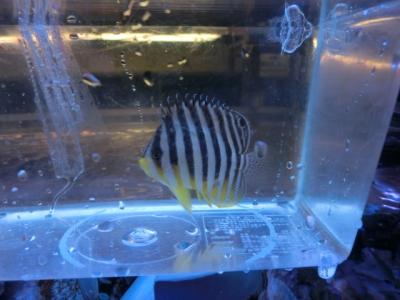 海水魚 333