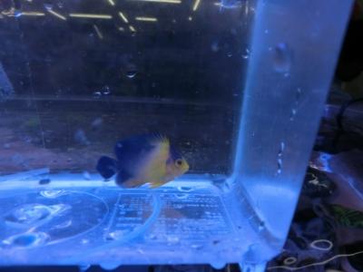 海水魚 336