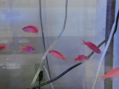 海水魚 337