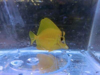 海水魚 338
