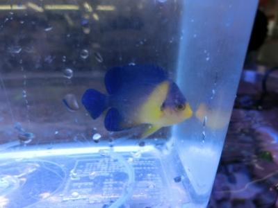 海水魚 342