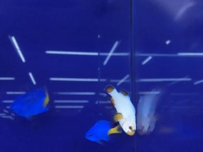 海水魚 344