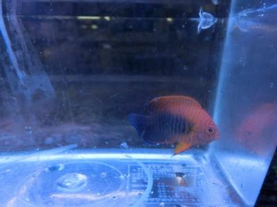 海水魚 347