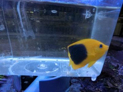 海水魚 348
